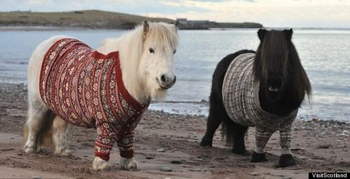 i'm sorry, a pony in a sweater! SO FUNNY.