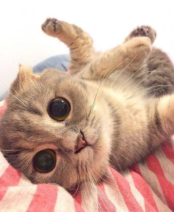 Pin Von Cathy Anderson Auf Animals In 2021 Niedliche Katzchen Katzenbabys Katzen