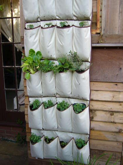 shoe hanger herb garden (good way to keep the cats out!)