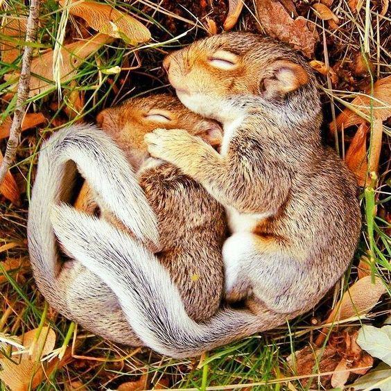 Snugly Squirrels
