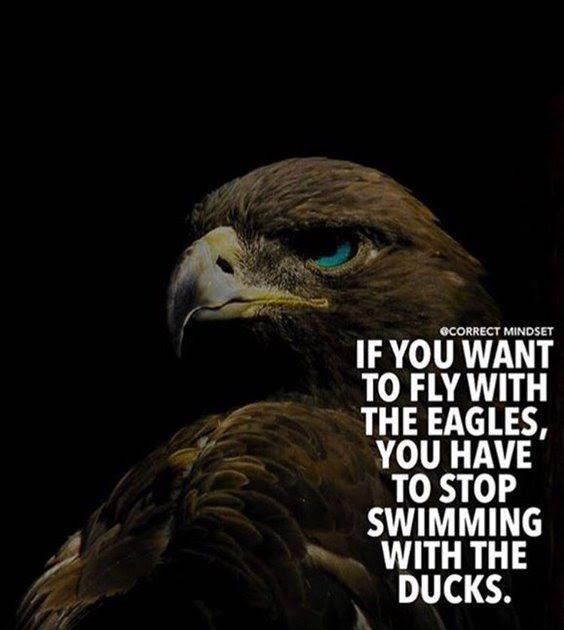 14 Inspirational Quotes About Eagles 77 Positive Quotes Motivation And Quotes On Achievement 36 Heal The Soul With Quotable Q Motivasi Kata Kata Indah Bijak