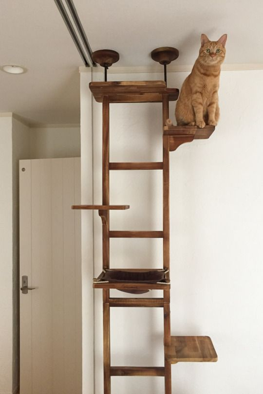 Katten bomen and doe het zelf on pinterest Christmas tree cat tower