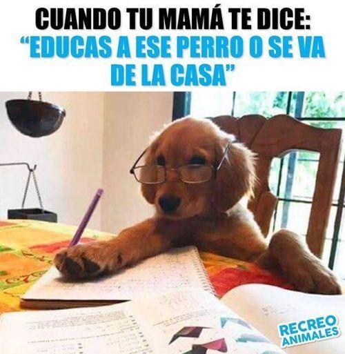 Perros Blog Memes De Perros Chistosos Humor Divertido Sobre Animales Memes Perros