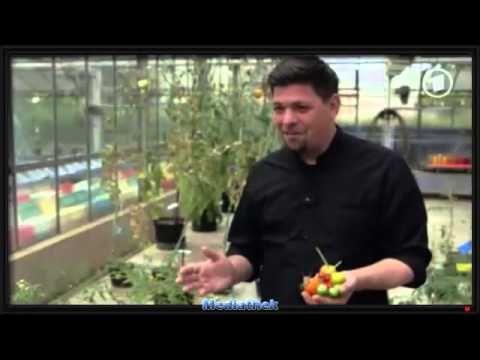 Was ist Ihnen ihr Gemüse wert? - Lebensmittelcheck - Selbstbewusst Gesund - http://selbstbewusstgesund.de/ernaehrung/was-ist-ihnen-ihr-gemuese-wert-lebensmittelcheck/#more-4675