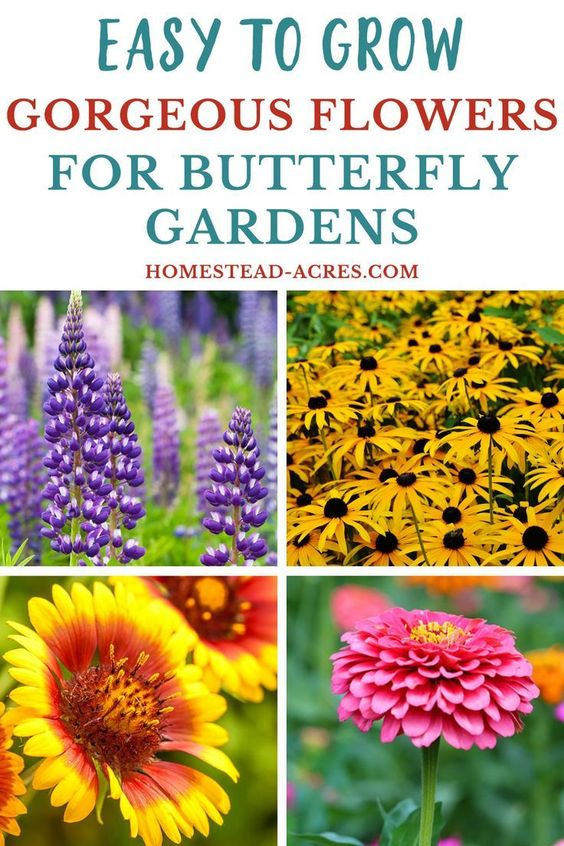 Check out these easy to grow flower ideas for your butterfly garden! Lots of beautiful flowers that attract butterflies and bees to your garden.
