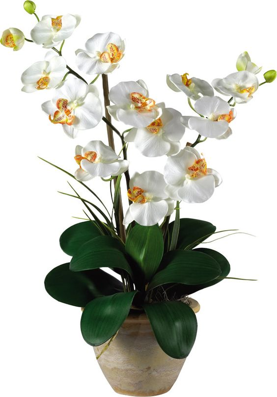 Double Phalaenopsis Silk Orchid Flowers in Cream