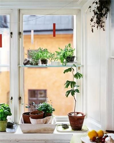 random plants all over