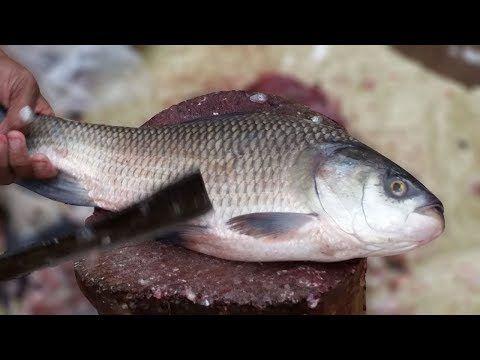 Pin On Fish Cutting