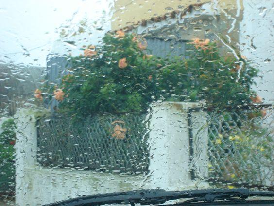 Desde el auto, Hibisco, gotas, lluvia, en la localidad de Cardal - Florida - Uruguay