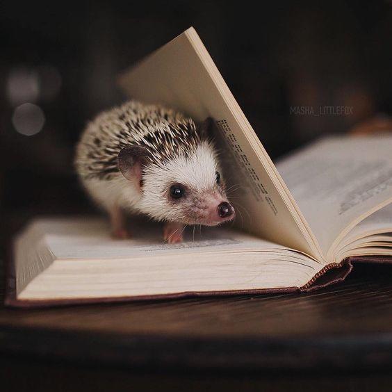 Всем позитивную вечернюю колючку :) Дорогие, посоветуйте книжек хороших на почитать - перекопала по сотому разу все, что было дома и…