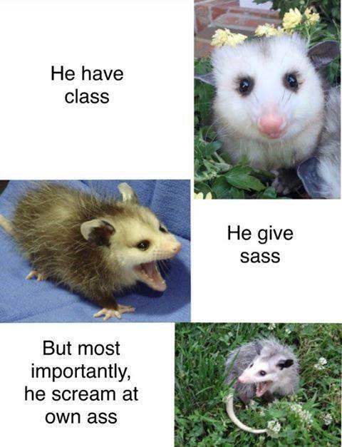 35 Hilarious Memes Guaranteed To Make You Laugh Funny Animal Memes Cute Funny Animals Animal Memes