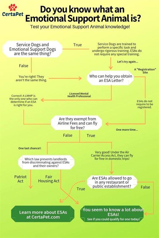 Dog Training Collar Instructions Lucky Dog Training 08087