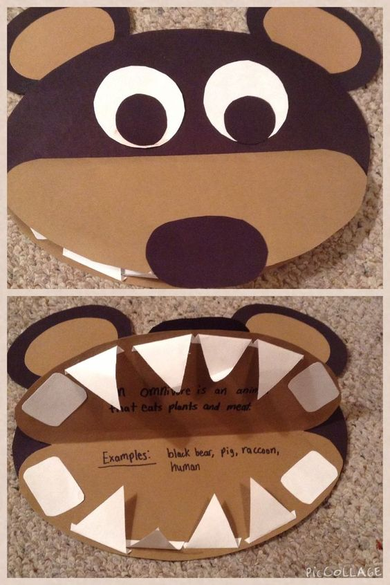 I have students make these brown bears when we study about omnivores. They glue in the type of teeth the bear has and write facts and examples of an omnivore. What a great visual!