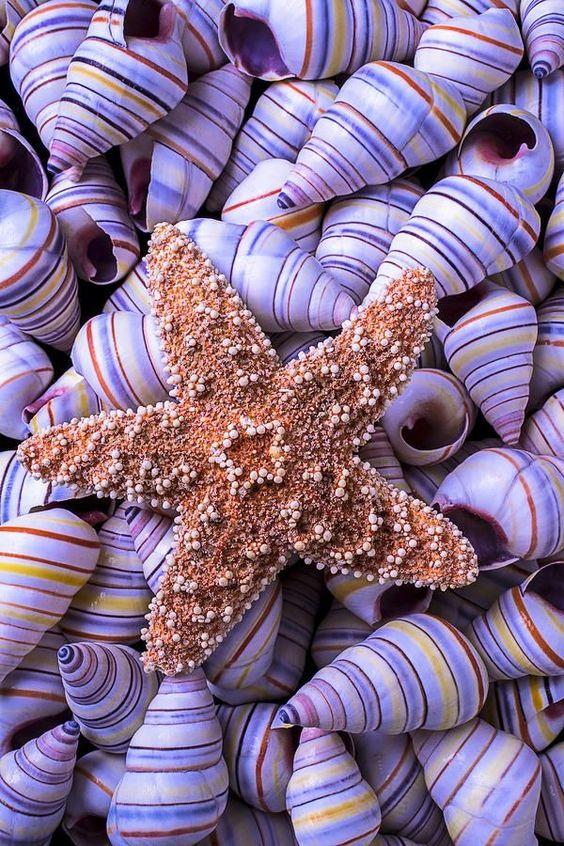Estrella de Mar Entre Caracoles
