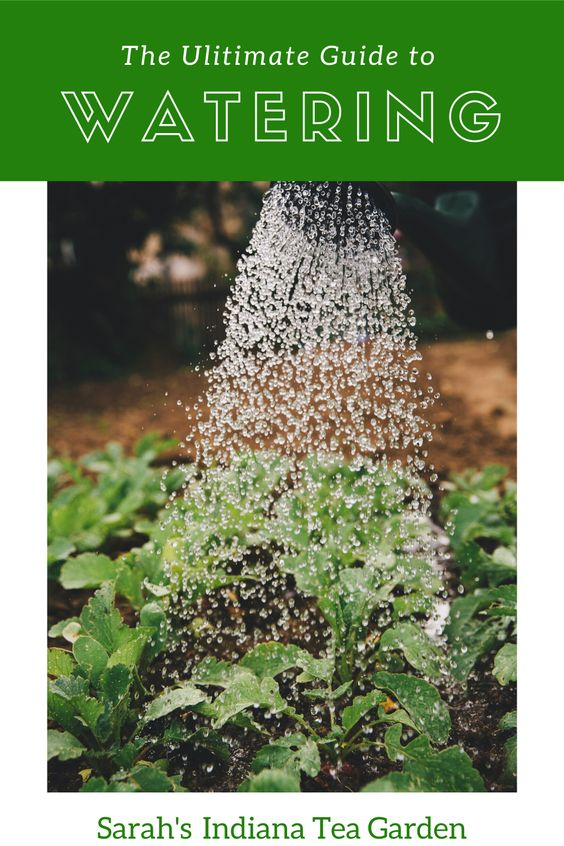 How To Water Herbs The Ultimate Guide In 2020 Plant Watering System Gardening For Beginners Sustainable Garden