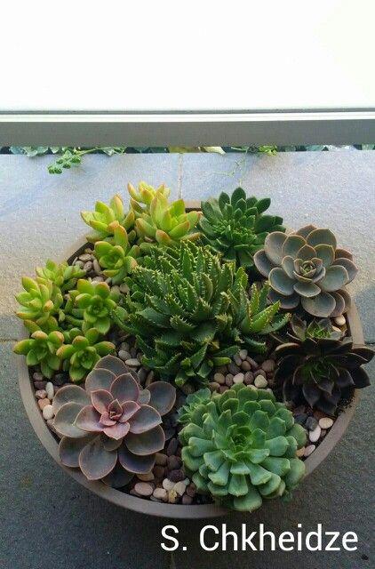 My new succulent arrangement