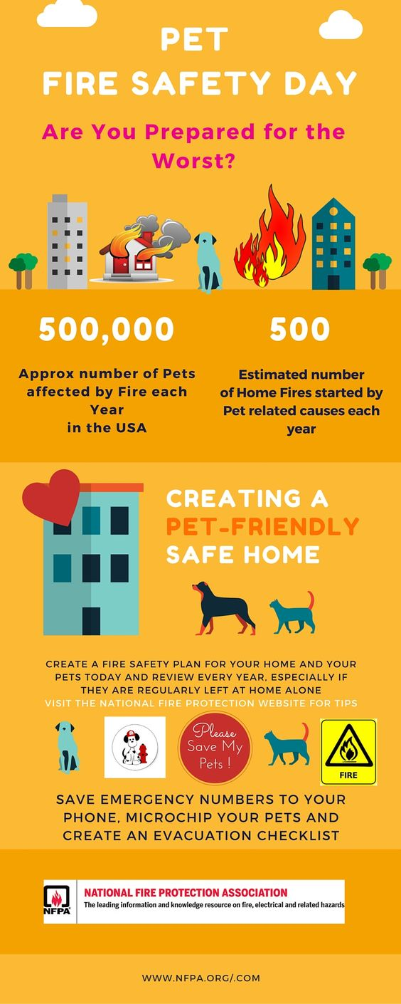 July 15th is National Pet Fire Safety DayDisplay a Pet Alert Rescue StickerDon't leave naked lights unattendedPet proof your homeMicrochip your pet