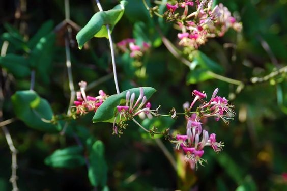Net Delighting In The Indigenous Woodbrook Native Plant Nursery Featured