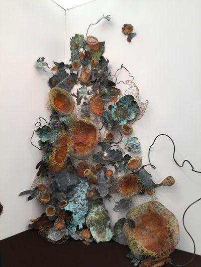F._campbell_'lichen'