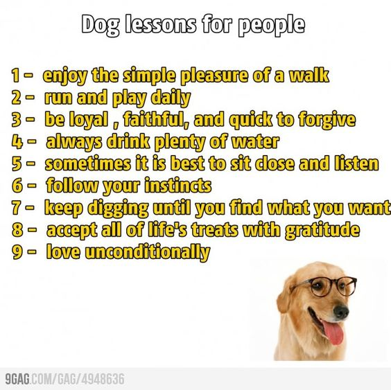 Dog lessons for people.
