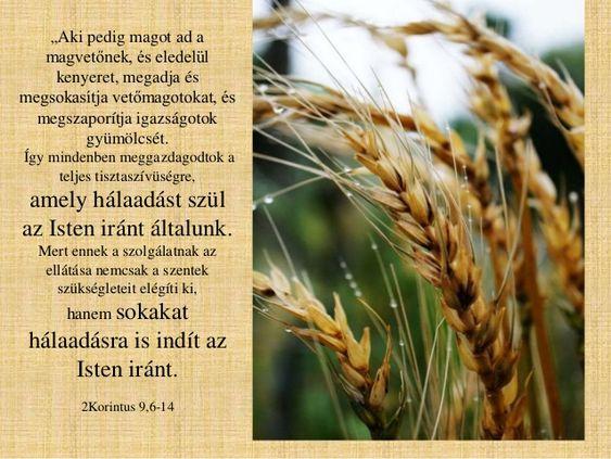 """""""Megadja és megsokasítja vetőmagotokat, és megszaporítja igazságotok gyümölcsét."""" (2Korinthus 9:10 RÚF)"""