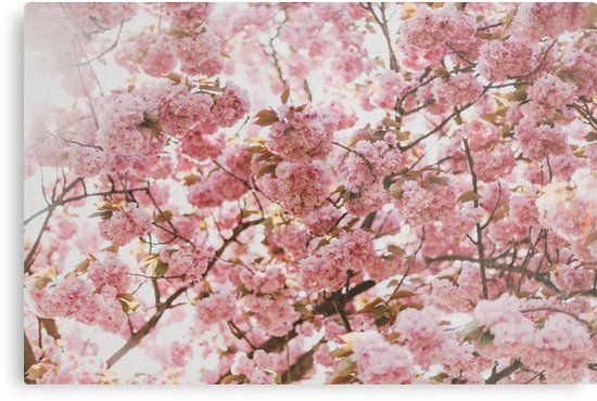 Blush Pink Flowers Artwork Design Also Buy This Artwork On Wall Prints Apparel Stickers And More Floral Background Hd Flower Backgrounds Flower Images