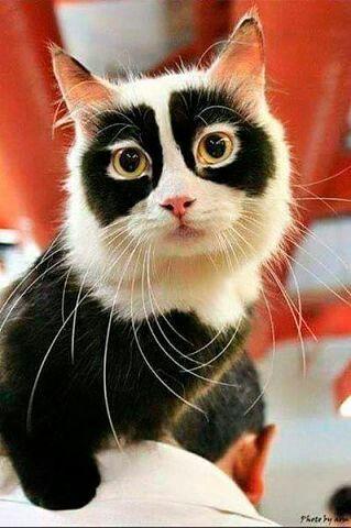 Imma ninja kittie