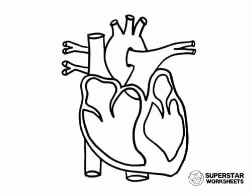 Coloring Pages Heart Anatomy Inspirational Heart Worksheets Superstar Worksheets Di 2020