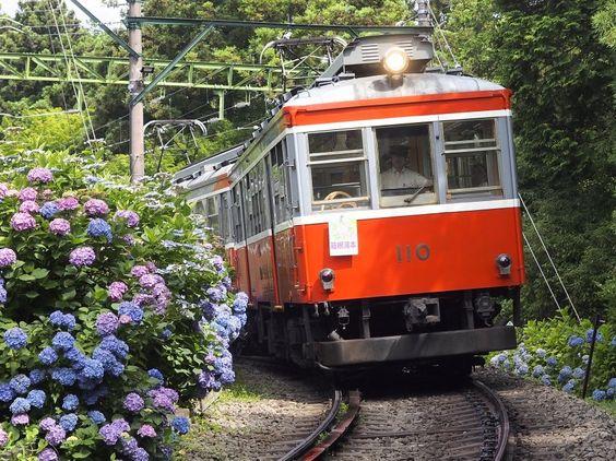 """きまぐれ鉄道ぶらり旅(きま鉄)さんのツイート: """"特技は『備後落合駅や姨捨駅、江川崎駅へ二週連続で遠征してしまう機動力』というライターMですが、都心部からも比較的アクセスしやすい箱根登山鉄道は実は今回が初乗車なのであります。紫陽花はこの週末が満開だったようです(^^) https://t.co/O7iR4tQCP9"""""""