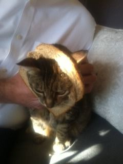 Cinnamon Bread. Well, actually the is the cats name. Cinnamon.