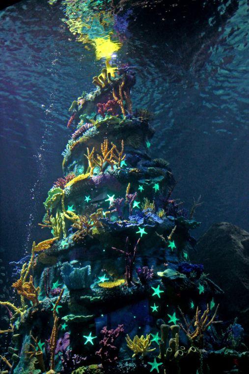 Pin By Taymee Khoo On Underwater Christmas Deco Aquarium Decorations Aquarium Christmas Deco