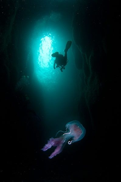 Jellyfish in the North Atlantic - in pictures