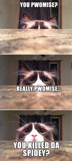 awesome animal memes - Google Search