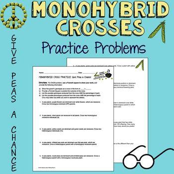 monohybrid cross practice worksheet free worksheets library download and print worksheets. Black Bedroom Furniture Sets. Home Design Ideas