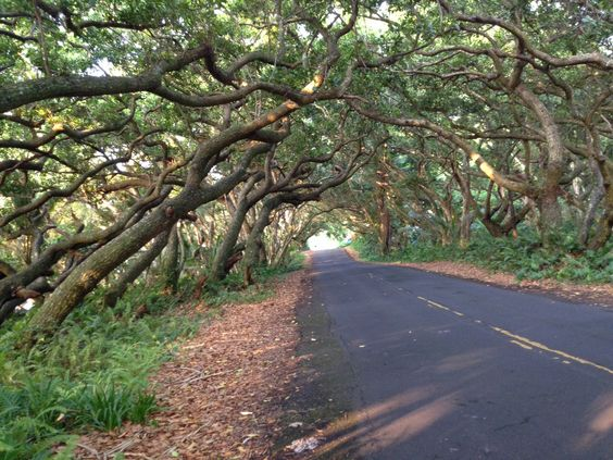 Kalani Retreat Center, Hilo, Hawaii
