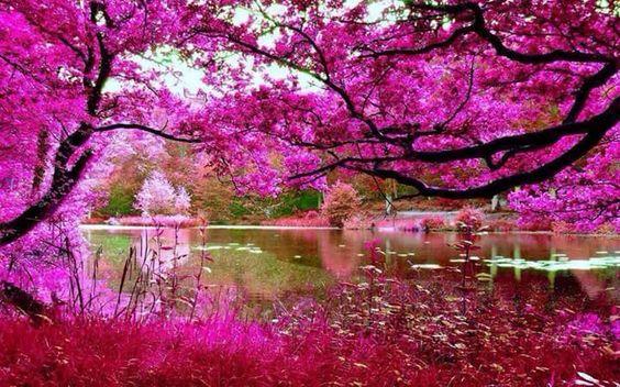 Tudo pink!!!