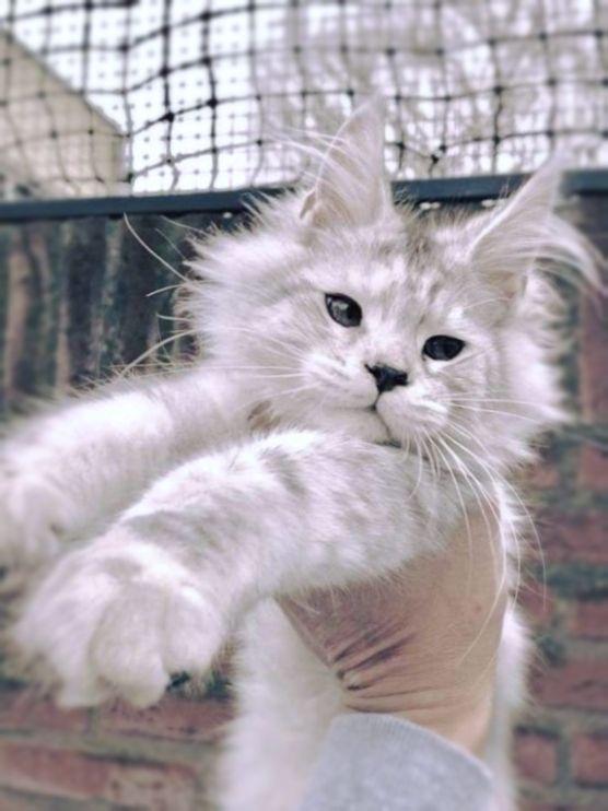 Pin On Beautiful Cats