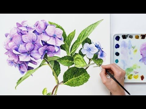 How To Paint Hydrangea Flowers In Watercolour Watercolor Flowers Tutorial Hydrangea Flower Watercolor Flowers