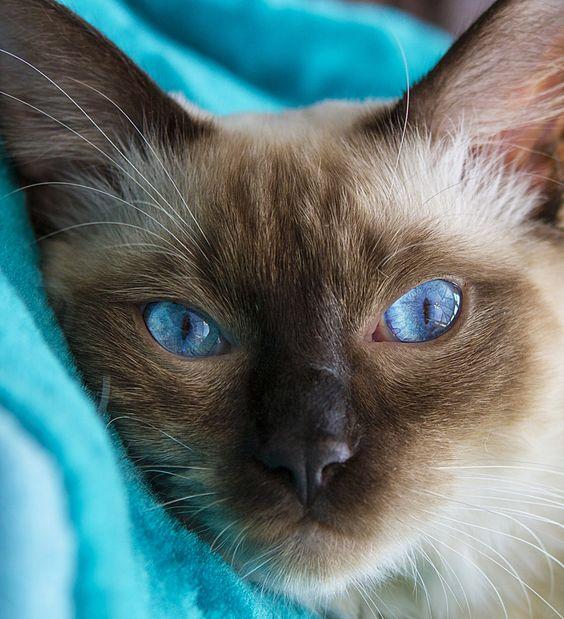 El mundo necesita de más gatitos