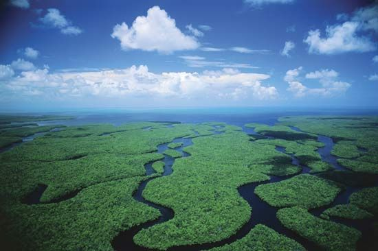 The Everglades are located in the southern portion of Florida. Home to many forms of plant and animal life, this precious ecosystem is truly a gem. Airboating is a popular form of ecotourism for exploring the Everglades.