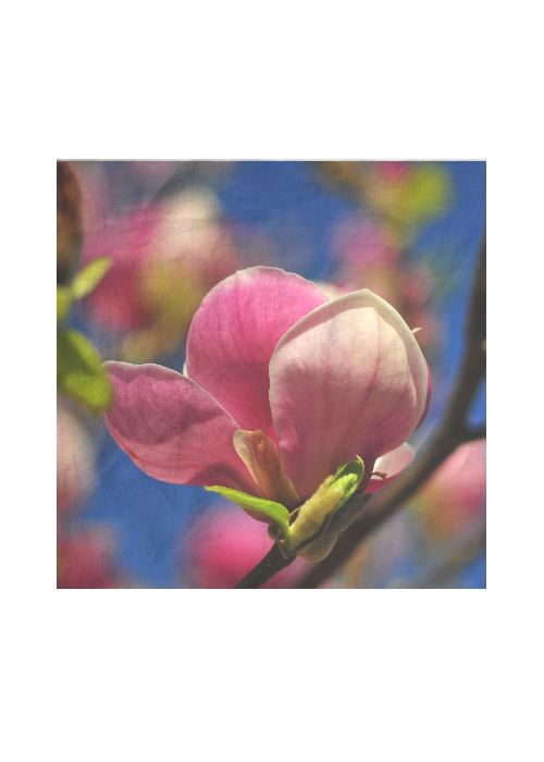 Silk Square Scarf - Flowering Magnolias by VIDA VIDA mrWgPH9