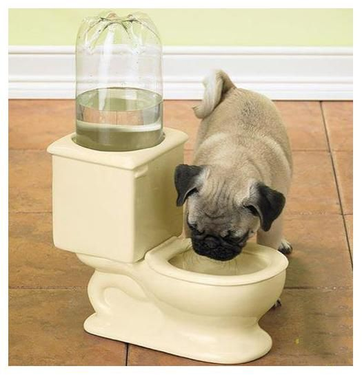 Mini Dog's toilet bowl for water :-) hehe