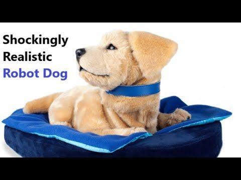 Shockingly Realistic Robot Dog Jennie By Tombot Dog Quotes