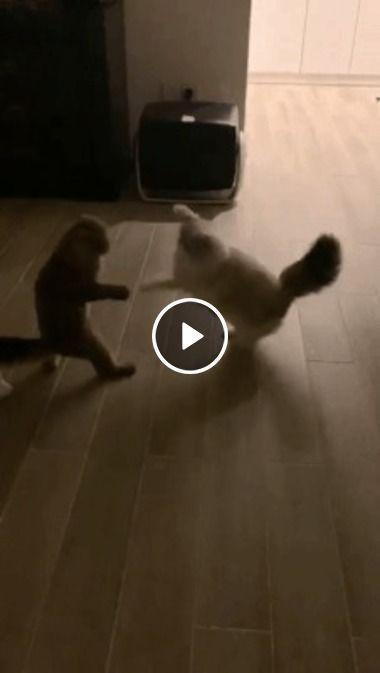 Gatinhos resolveu treinar para uma luta de box