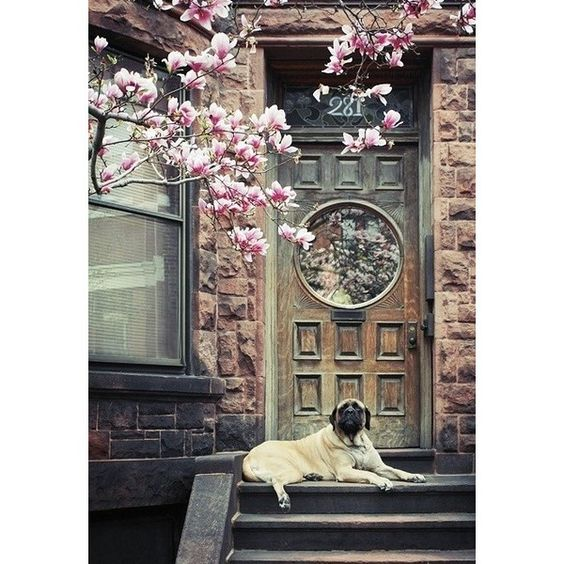 Door Window ❤ liked on Polyvore