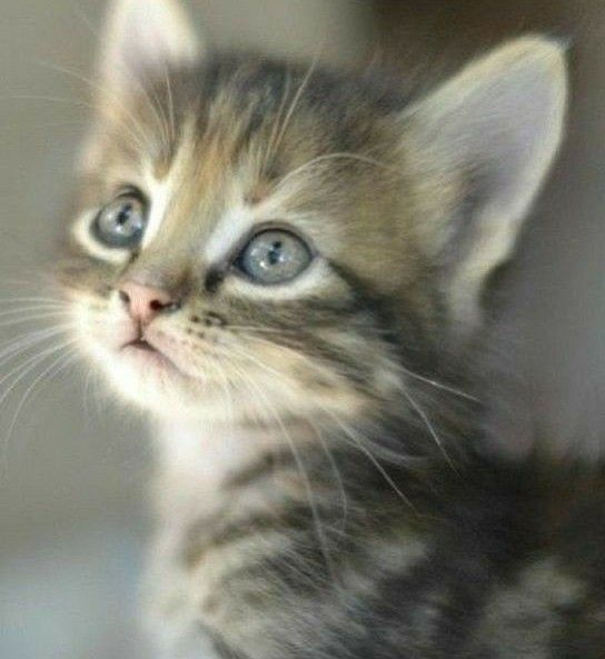 Love This Very Cute Baby Kitten Picture Cute Animals Cute Cats Kitten Pictures