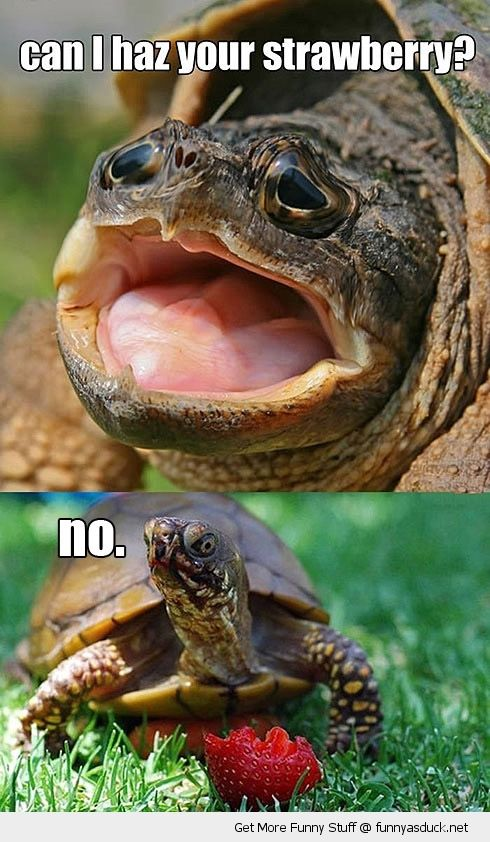Disappointed turtle meme - photo#17