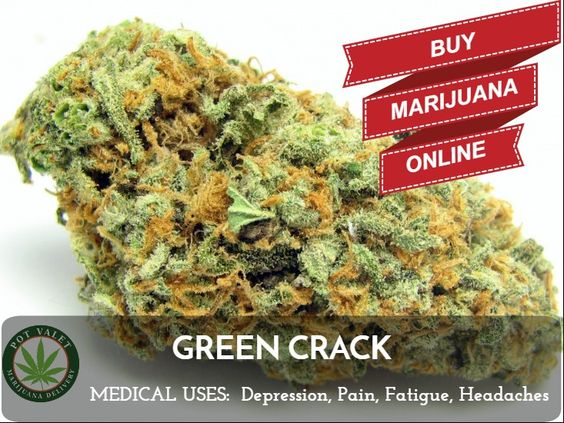 Green Crack Strain May Help Fight Fatigue! Buy marijuana online: http://bit.ly/2cRTpST #PotValet #Marijuana #Cannabis #Weed #Delivery #Sales