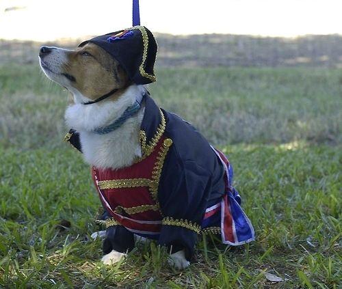 Napoleon mastiff pup | Natural History