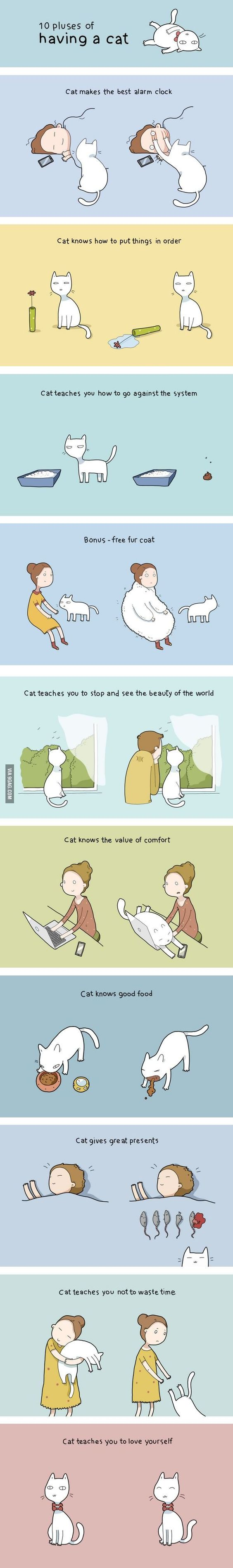 10 beneficios de tener un gato - Benefits of owning a cat :):